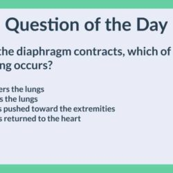 HTQOD019: Diaphragm (Anatomy and Physiology, Science)